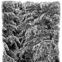 Зима :: Alexander Demetev