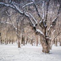 В старом парке :: Людмила Фил