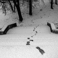 """""""Следы на снегу"""" :: Ольга Лиманская"""