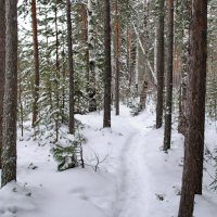 зимний лес :: ТАТЬЯНА Лыжина