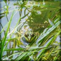 Жизнь на болоте :: morgo