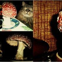 Про грибы... :: Кай-8 (Ярослав) Забелин