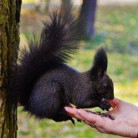 Кедровые орешки для черняшки... :: Sergey Gordoff