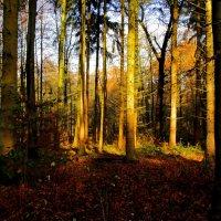 Осенний лес :: Alexander
