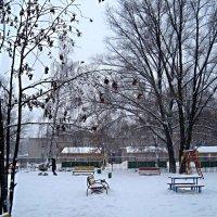 Зима пришла.. :: Елена Семигина