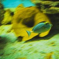 Рыбка :: Ksyusha Pav