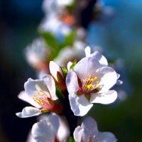 Как свежи воспоминания лета! :: Виктор Никаноров
