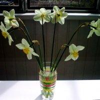 И снова о весне. Нарциссы :: татьяна