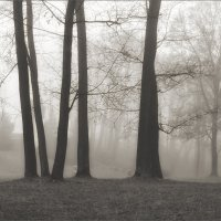 о фотографии в тумане :: Jiří Valiska