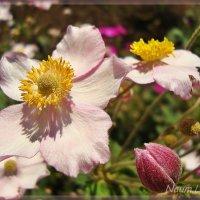 Желтые реснички на розовом :: Лидия (naum.lidiya)