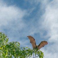 Летучие лисички :: евгений васильев