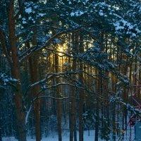 Вечер в Лесных далях :: Татьяна Голубева