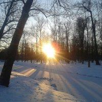 Зимнее утро :: Сапсан