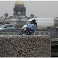 Мечтательная птица :: Galina Belle