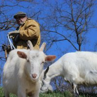Goats :: Ульяна Куприй