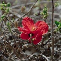 Цветок новой жизни :: Ефим Журбин