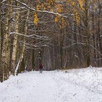 Пробежаться по первому снегу :: Владимир Безбородов