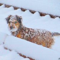 Дождалась снега :: Евгений Замковой