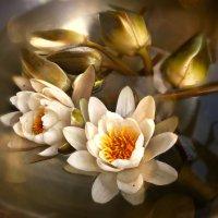 Большой цветок или эффект лотоса... :: Людмила Павлова