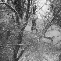 С первым днем Зимы...или уходящая Осень! :: Елена Нор