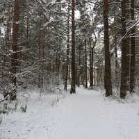 Ноябрь, зимний... :: Владимир Холодницкий