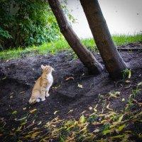 Любопытный котенок :: Владимир Безбородов