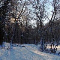 Морозным утром. :: Инна Щелокова