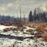 Первый снег.. :: Алексей Макшаков