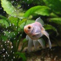 Рыбка :: Дмитрий Лебедихин