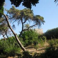 Греция. Родос. Парк старого города. :: Лариса (Phinikia) Двойникова