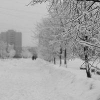 Зимняя аллея :: Ольга Лапшина