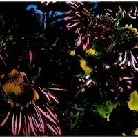 Осенняя палитра хризантем :: Нина Корешкова