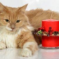 Рыжий кот :: Эдуард Пиолий