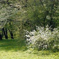 Весна в ботаническом саду :: Денис Масленников