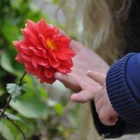 Ботанический сад. Октябрь... :: Елена Тимонова