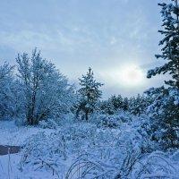 Зимняя тема 22 :: Игорь Александрович Оренбург