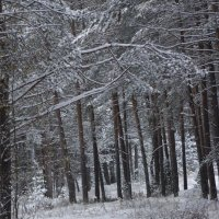 зимний полдень :: Marina Tamm