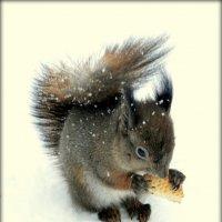 Белка зимой  /2/ :: Сергей
