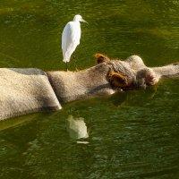 В зоопарке :: сергей cередовой