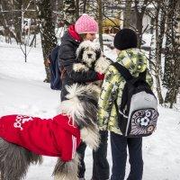 дети и собачки :: Лариса Батурова