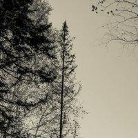 дерево на дереве :: lev