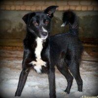 Я простой дворовый пёс, что поесть ты мне принёс?:) :: Андрей Заломленков