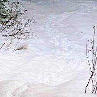 Белая куропатка в белом снегу. :: Юрий Кузмицкас