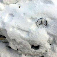 Брэнд в снегу :: Сергей Рубан