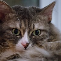 Просто кот :: andrey
