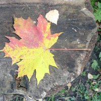 Осень :: Виктор