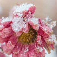 Снег :: Ирина Лядова