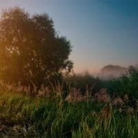 Туманный  рассвет :: Александр Березуцкий (nevant60)