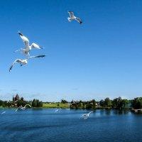 Пейзаж с чайками :: Владимир Безбородов