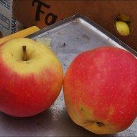 Два яблочка :: Нина Корешкова